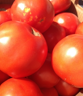 Tomato Tip: Don't refrigerate your tomatoes! It might make them keep a little longer, but you'll lose LOTS of flavor! Keep them at room temperature, and gobble them up!